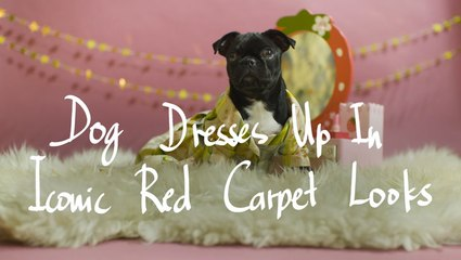 Dog Dresses Up In Iconic Red Carpet Looks