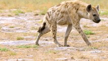 Why Hyenas Are One of Africa's Most Efficient Predators