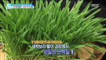 [HEALTH] Gourmet nutrition is one place! The secret of 'sprout barley',기분 좋은 날20190522