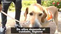 Las terapias con animales llegan a las cárceles de nuestro país
