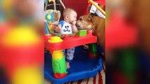 Bulldog Divertido y El Bebé Son Los Mejores Amigos--Gracioso Bebé y Mascota