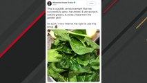 Ocasio-Cortez Successfully Grew Spinach And Internet Goes Wild