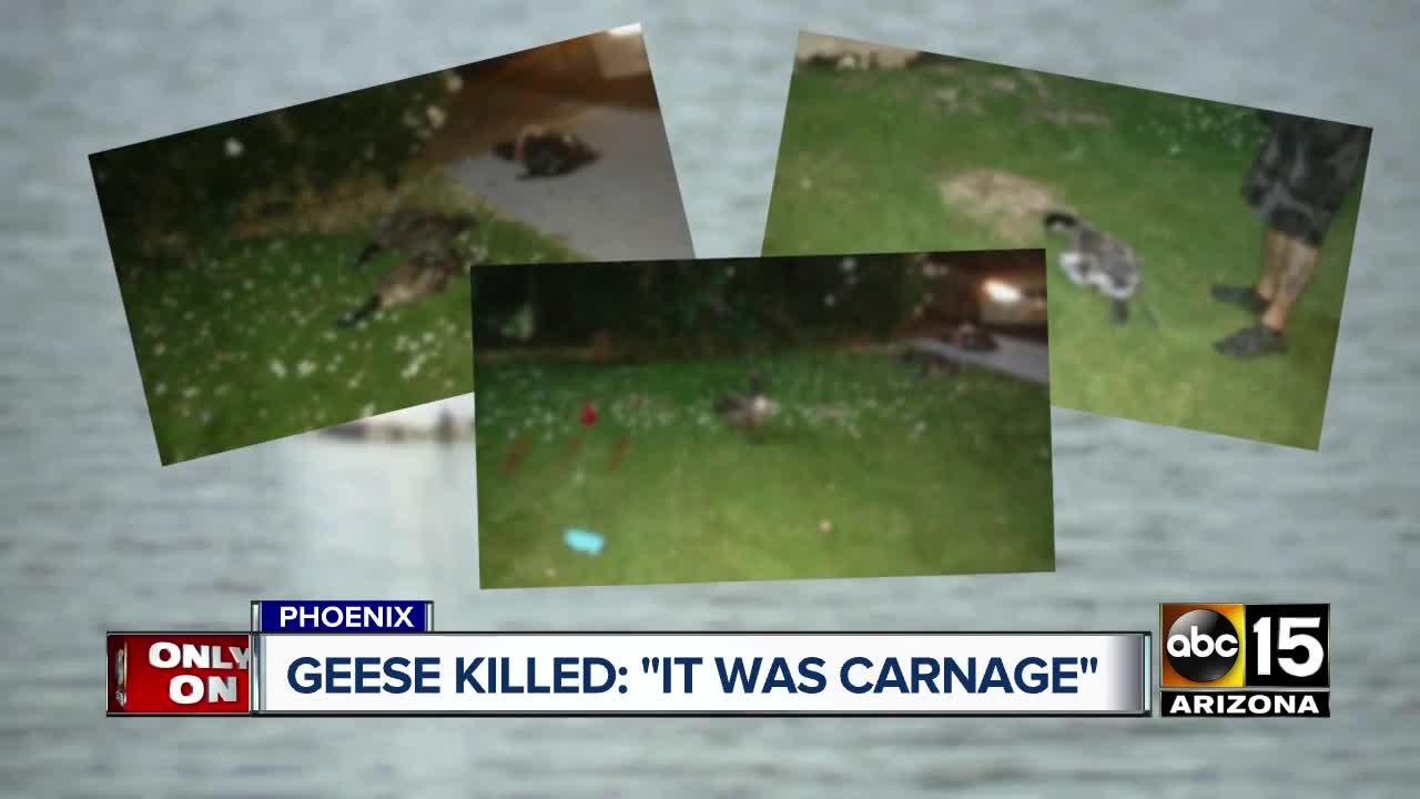 Who's shooting geese in north Phoenix? Six found killed in last week