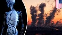 Polusi udara rusak tiap organ di tubuh, menurut studi- TomoNews