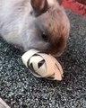 Ce lapin adore son nouveau jouet et ça se voit. Trop chou !