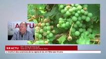 SO invité - L'institut des sciences de la vigne et du vin fête ses 10 ans