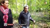 Élections européennes : les voix des retraités de droite sont très convoitées
