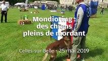VIDEO. A Celles-sur-Belle, les chiens attaquent pour de rire