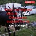 Cacabingo