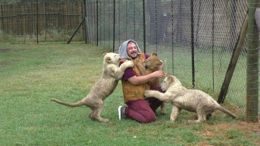 Burak Akkul'un yavru aslanlarla mücadelesi