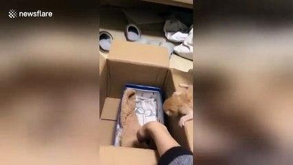 Une chatte éduque son chaton