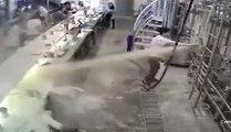 Un employé provoque une inondation de bière après avoir ouvert une cuve !