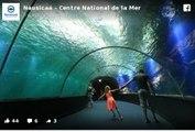Le plus grand aquarium d'Europe : Nausicaá