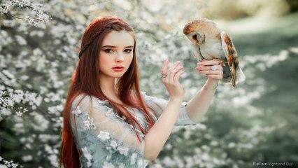 Celtic Music - Owls Worship    1 Hour - 4K, Beautiful Celtic music