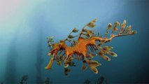 This Aquarium Just Added an Exhibit of Ultra-rare Sea Dragons — See the Photos