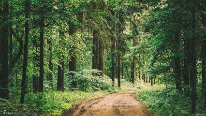 Woodland Forest Rain   10 Hours - 4K,  Sound of Rain Meditation, Autogenic Training, Relaxing Sounds for Deep Sleep