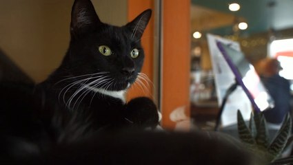 Orlando Cat Cafe is the Purrfect Place to Adopt a Cat