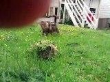 Quand deux chats jouent à cache-cache. Trop drôle !