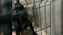 Affe klaut Handy und filmt Zoobesucher