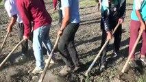 Mevsimlik tarım işçilerinin ramazan mesaisi - MUŞ
