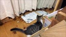 Chat mignon et chaton mignon