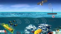 Pentagon Wants To Recruit Fish For Detecting Underwater Drones