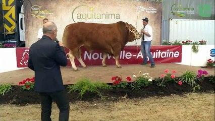 Aquitanima 2019 - samedi 1er juin