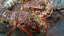 Street Food Market Discovery | Japanese Food - RED LOBSTER Scorpion Crabs Blue Crab Sashimi Teruzushi Japan