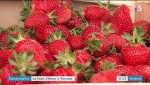 Consommation : la fraise d'Alsace mise à l'honneur