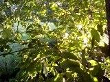 vent et soleil dans les branches d'un arbre
