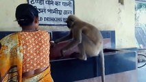 Human and Animal Bond - Thirsty Monkey and Women Help The Animal