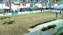 Aquitanima 2019 - Concours interrégional de la race PRIM'HOLSTEIN Aquitaine