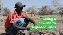 Burkina Faso: Giving a new life to degraded lands