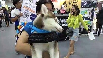 Pampered pooches at Bangkok pet show