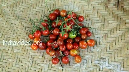 Tribal Dish Made Of Forest Beans - Kattumocha Kulambu India Video