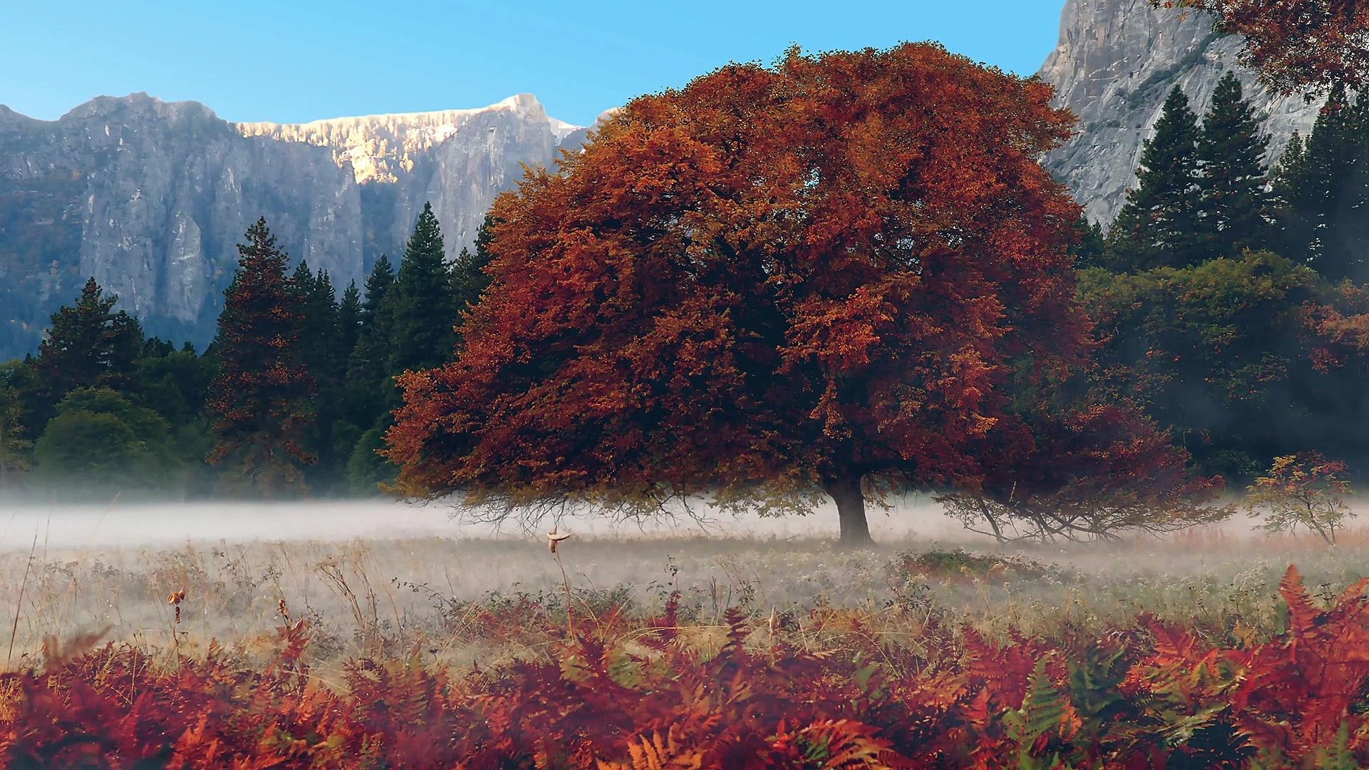 Beautiful Relaxing Music: Guitar Flute & Strings, Beautiful Music with Nature