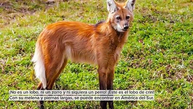 LINDOS Y DESCONOCIDOS ANIMALES