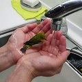 Cet oiseau ne peut pas résister à l'eau. Regardez ce qu'il fait !