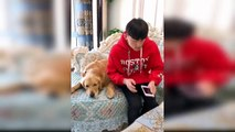 Dog Reaction to Faking Owner Death - Funny Dog Reaction with Faking Death Compilation