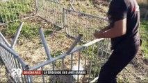 Les caméras de France 2 filment des anti-viande libérer des volailles dans un abattoir en pleine nuit - Vidéo