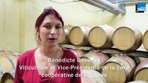 Bénédicte BOSSELUT / Viticultrice et Vice-Présidente de la cave coopérative de Sigoulès