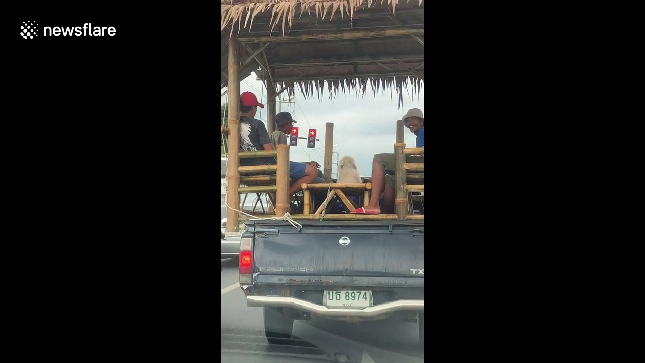 Bizarre moment pet dog and 4 men ride in bamboo hut on wheels