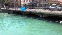 Annecy installe un barrage flottant pour sauver ses bébés cygnes de la noyade