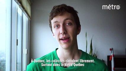 L'Actu en 3 minutes: l'interdiction des calèches à Montréal