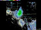 Un nuage de coccinelles survole le ciel de Sans Diego, en Californie