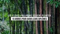 Philippines : pour être diplômés, les étudiants devront planter 10 arbres