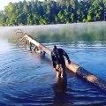 Marcher en équilibre sur un tronc d'arbre au dessus d'un lac... erreur