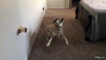 """Quando um cão aprende o significado de """"queres ir..."""""""