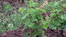 Agriculture bio : le Centre-Val de Loire est dernier