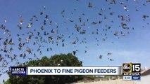 New Phoenix ordinance bans feeding pigeons